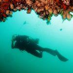 Conocer la abundancia y distribución de peces y otras especies marinas es clave para su manejo como recurso y para su preservación. Créditos: Gentileza del Dr. Alejo Irigoyen