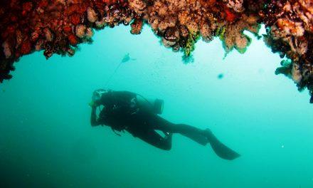 ¿Cómo hacer censos de peces? Científicos proponen un ingenioso método