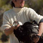 El Dr. Pablo Alarcón minutos antes de liberar a una hembra adulta de cóndor andino luego de la colocación de un transmisor satelital.