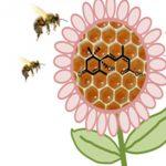 El ácido abscísico, proveniente de las plantas, mitiga los efectos nocivos del frío en el desarrollo de las larvas de las abejas productoras de miel.