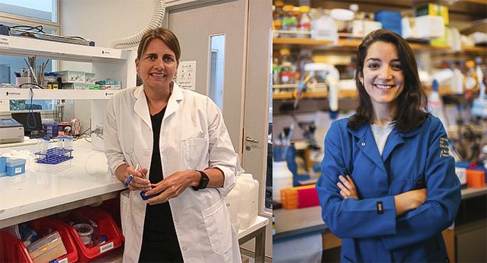 Derrumban paradigma de la biología y abren camino para una nueva terapia del cáncer de mama