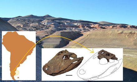 Hallan antepasado del yacaré que habitó la Patagonia hace 65 millones de años