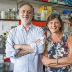 Células de la sangre ayudarían a la detección temprana del Alzheimer