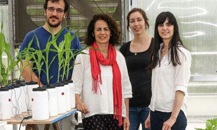 """Científicos de La Plata identifican un compuesto que """"enciende"""" el fósforo de los suelos"""