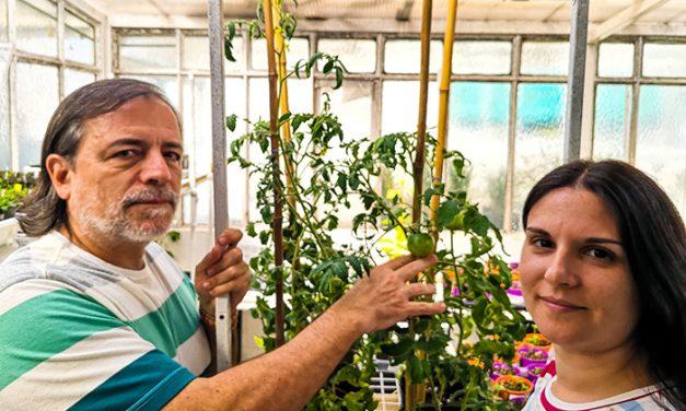 Estudio argentino sienta bases para conocer mejor lacapacidad reproductiva de los cultivos