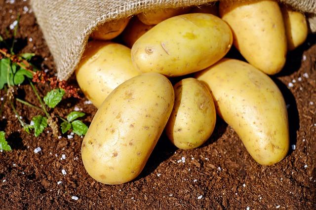 Sientan bases para lanzar al mercado nuevas variedades de papa