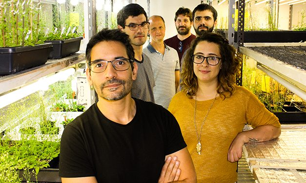 Estudio argentino sienta bases para aumentar la producción del principal cultivo forrajero
