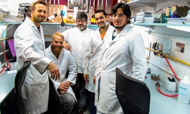 """Investigan una bacteria probiótica como """"plaguicida"""" natural para el principal hongo patógeno del maíz"""