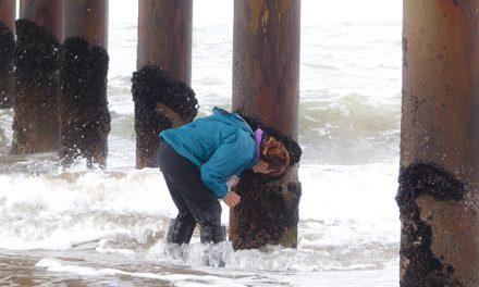 """Mar del Plata: un """"fósil viviente"""" delata la contaminación de las aguas del puerto"""