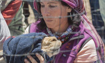 """""""Las vicuñas son una contribución de la naturaleza a las personas de la Puna"""""""