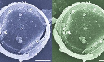 Monitorean microalgas marinas tóxicas e inocuas en las costas bonaerenses