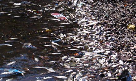 Córdoba: satélites y algoritmos anticipan la muerte de peces