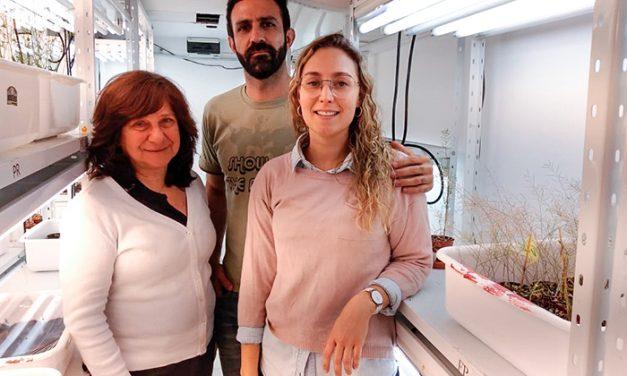 """Científicos argentinos descubren un gen que """"frena"""" el desarrollo de las raíces laterales de las plantas"""