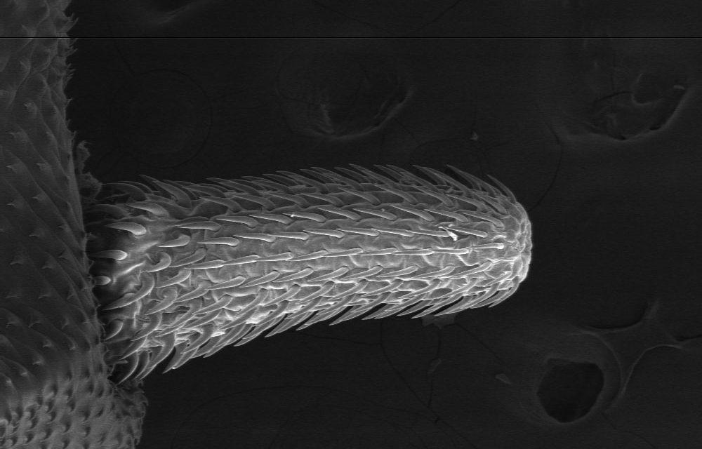 Arman primer inventario de parásitos de peces marinos patagónicos