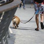 Ciudad de Buenos Aires: solo 1 de cada 3 dueños de perros lleva bolsa para recoger las heces