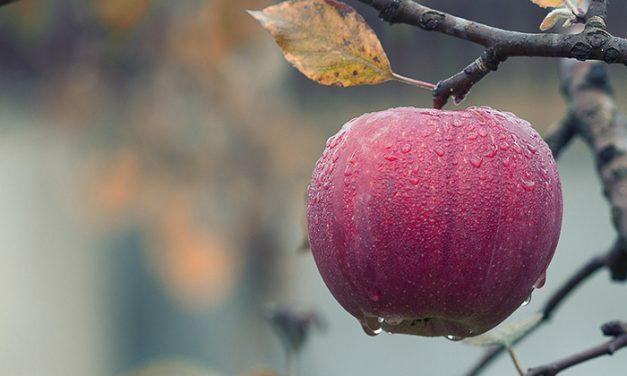 Compuesto de la cáscara de manzanas interfiere con virus que causa diarreas graves en niños
