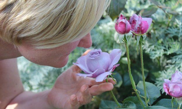 Descubren que el olfato distingue mejor las mezclas que oloresindividuales