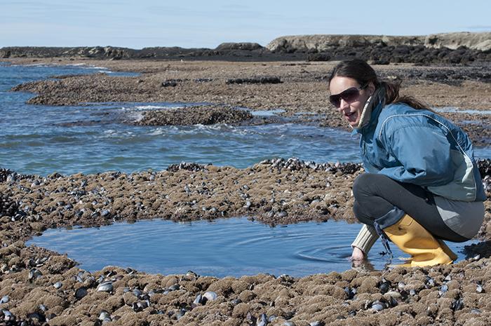Un alga exótica podría usarse como alimento o fertilizante