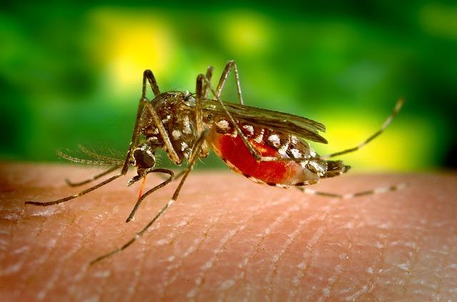 Dengue: instan a no descuidarla como problemática de salud