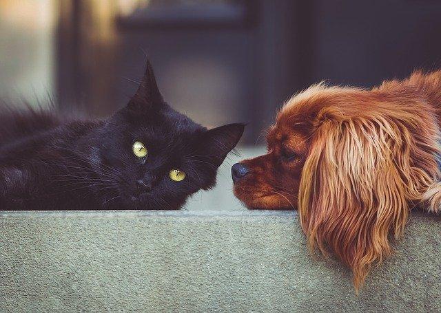 Buscan identificar el nuevo coronavirus en perros y gatos de Buenos Aires