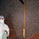 Identifican dos nuevos virus en colonia de murciélagos del centro de Rosario