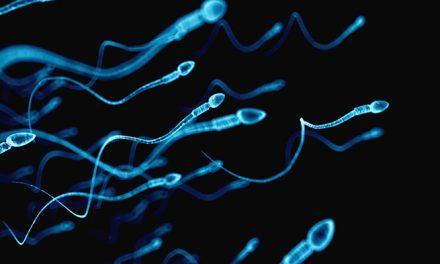Una dieta elevada en grasas podría reducir la calidad de los espermatozoides