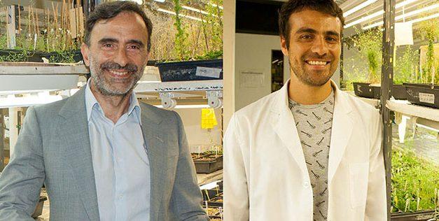 Científicos argentinos descubren que las plantas presentan memoria a corto plazo de la temperatura