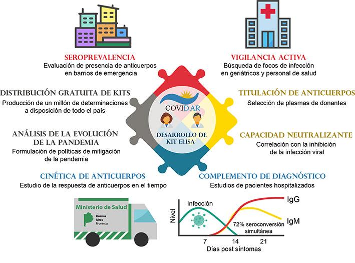 Estudio argentino revela información sobre la respuesta del sistema inmune al nuevo coronavirus SARS-CoV-2