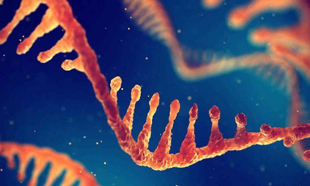 A 60 años del descubrimiento del ARN mensajero