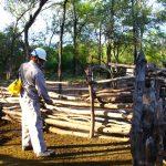 Tras 10 años, un programa logra interrumpir la transmisión humana de la enfermedad de Chagas en un municipio chaqueño