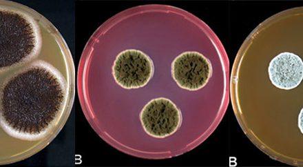 El campo magnético influye sobre la circulación de los hongos en el aire