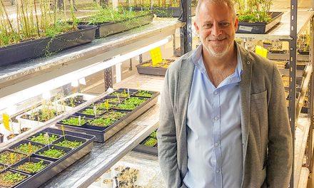 Premian trabajo argentino sobre el reloj circadiano de las plantas