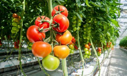 """Buscan desarrollar """"spray"""" inocuo para """"potenciar"""" cultivos de hortalizas"""