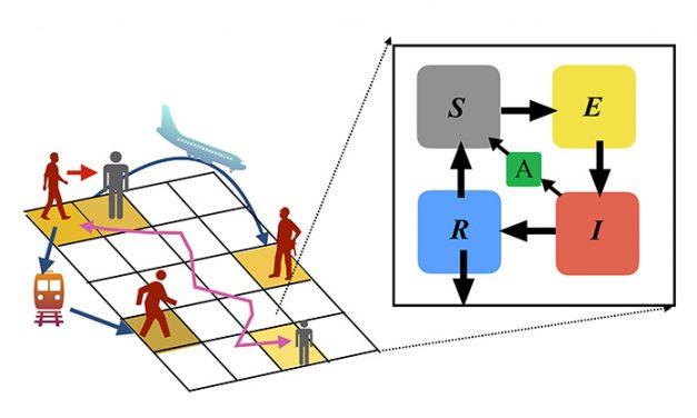 Desarrollan un modelo que predice la evolución de la pandemia de COVID-19 en diferentes escenarios