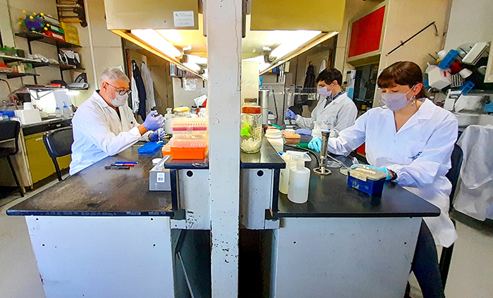 Vacuna experimental argentina contra COVID-19 genera una respuesta inmune potente y recibirá importante subsidio